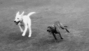 Arizona Custom Canine
