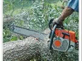 Tree service & land cleaning stump grinder