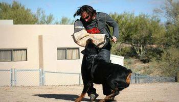 Sublime Canine.... Professional Dog Training & Behavior Modification