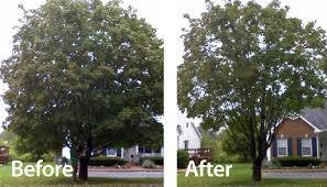 HARRIS TREE TRIMMING/TREE REMOVAL/ALL YARD SERVICES...