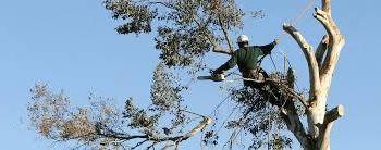 Oscar Tree Service