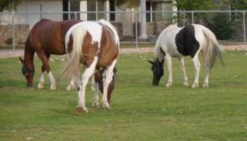 Horse Boarding for retired horses