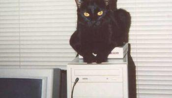 Do you need computer help? Call Panther TEK!