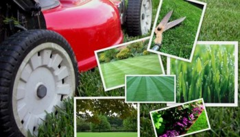 Rubens Lawncare :) reasonable prices