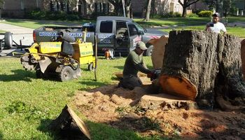 Stump grinder service (1st stump up to 24 inche $90.00)