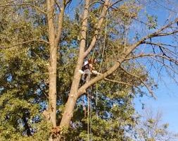 Quality Tree Service - takedowns, trimmings, topping, deadwooding