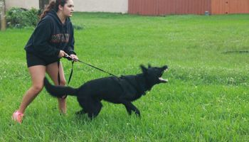 ECONOMICAL DOG TRAINING