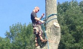 Cheap tree work! We greatly appreciate it!