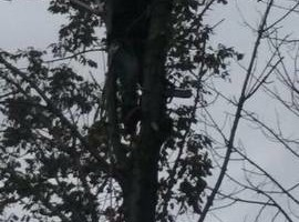 Professional tree trimming and takedown (Columbus and surrounding area)