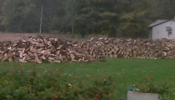 Firewood / fire wood 3 cords 350