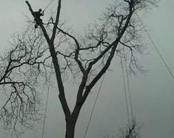 Tree Removal Service.  Skinner Expert