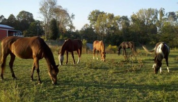 Quiet Horse Boarding Facility ~ Full & Self Care!