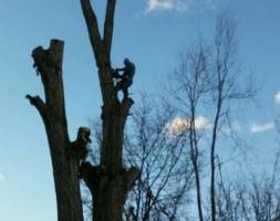 Alex's tree removal