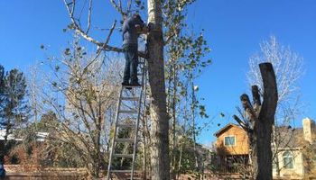 E&C Tree-Service & Landscape