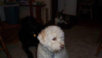 Dog sitter Joel