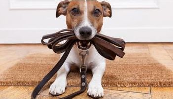 Looking for a Pet Sitter / Dog Walker?! We can help!
