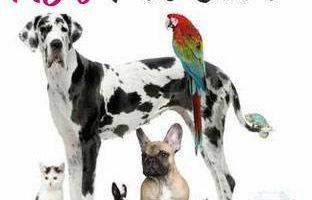 AJ's Pet Care - Training, Pet Sitting, Meds, Overnight Insured &Bonded
