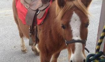 Pony Rides and Farm Petting Zoo ~ We come to you!