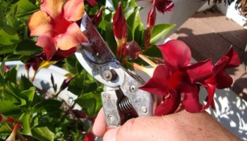 Md Licensed Tree Experts, Tree & Shrub Pruning, Removal, Preservation