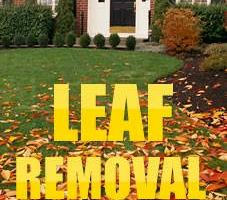 Leaf Removal. Call Mike for an estimate!