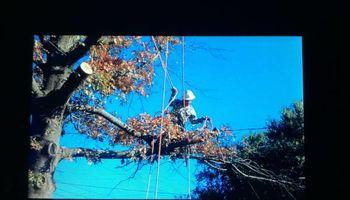 STANLEY REVIS TREE SERVICE