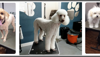 Quality Pet Spot Dog Grooming