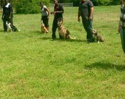 Dog training by Tiki Quinn