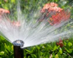 Sprinkler Repair. Blossom Valley