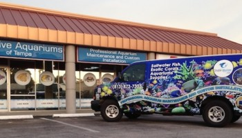 Creative Aquariums Of Tampa