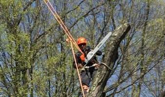 Art tree service - Tree / Stump removal