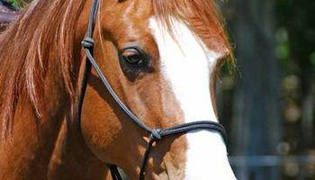 Professional Horse Trainer