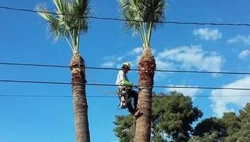 Best Price on Palms Trees, Pines, Cactus, Mesquite and Well Pruned!