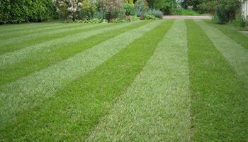 Affordable lawn service - now taking calls for 2016