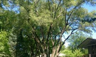 Waddell Tree Trimming and Removal