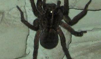Patron Exterminators & Pest Control