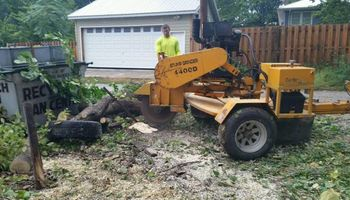Tree Service - Tree Removal, Tree Trimming, Stump Removal