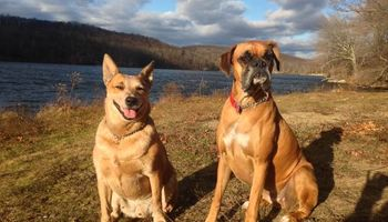 Dog/Pet Sitter for your friend this holiday season