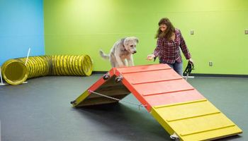 Puppy Basic & Agility Fun Classes