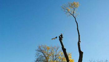 K.T.S TREE SERVICE - STUMP GRINDING - BUCKET SERVICE/CLIMBING