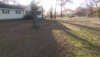 Steve's Lawn Care. Leaf Clean up/Brush clean up