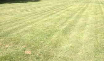 Extended Lawncare Services - lawn, gardens, gutters, bushes