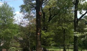 TIMBER TREE SERVICE *FREE ESTIMATES*