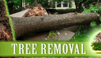 AFFORDABLE TREE & LANDSCAPING. FREE ESTIMATES AND COMPETITIVE PRICES.