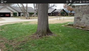 Leaf Mulching or Raking