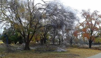 Storms got your trees (and you) down? Cheap tree limb removal