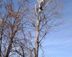 Rods tree service by Rodney