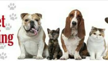 Do you need Cheap Loving Pet Sitter? LOOK HERE!
