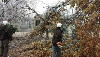 TREE WORK. ICE STORM CLEAN UP
