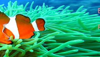 Eugene Fish Rescue