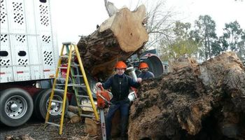Ed Jenson's Tree Service